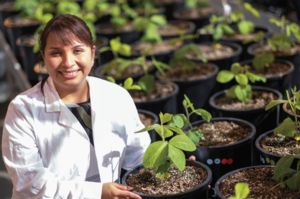 Image of Cecilia Martinez-Gomez with soybean plants