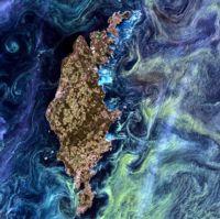 Image of algal blooms in Baltic Sea