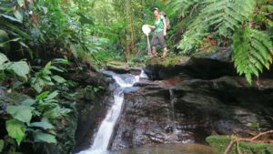 Image of Sarah Fitzpatrick on her way to catch guppies in a stream in Trinidad.