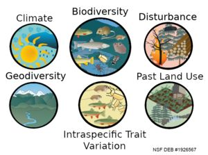 Diagram showing different species and drivers of biodiversity