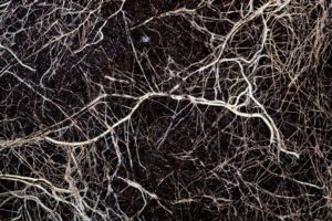 Roots in soil